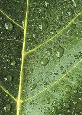 ete pluvieux